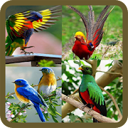 Animated Birds GIF