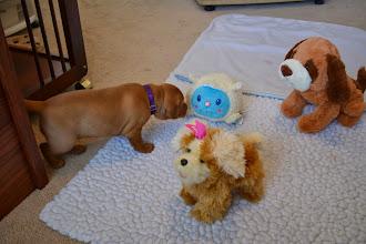 Photo: New toys
