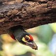 Biodiversity of Maharashtra & Goa , India