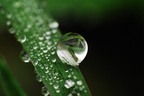 a water drup by Jade Bracke - Nature Up Close Natural Waterdrops ( water, macro, nature, drop, photography,  )
