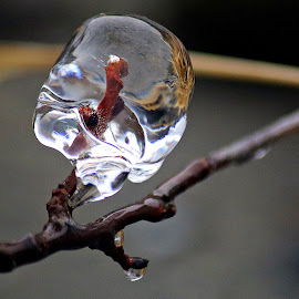 by Inger Lefstad - Nature Up Close Other Natural Objects
