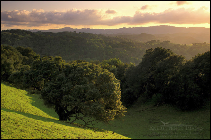 Photo: Oak trees and green grass on hills over valley in spring at sunset, Briones Regional Park, Contra Costa County, California  I just watched a beautiful sunset... from my office. (Grrr!) If I'd gone up to my local hills, it would have probably looked a lot like this.  I'd submit this image for #ruralsaturday - except it's not really rural. It's more like 'suburban.' This was shot in the heart of San Francisco's Bay Area hills. This image was shot on film, using Fuji Velvia.