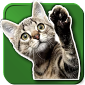 WAStickerApps Cats
