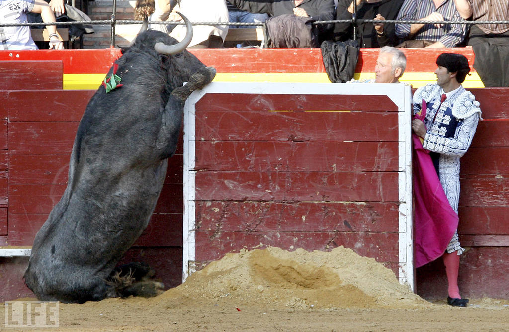 Photo: During a bullfight in Valencia, Spain, a bull tries to jump the barrier while a matador looks on. Photo: Juan Carlos Cardenas/EPA/Landov Mar 22, 2011