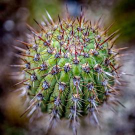 Cactus by Hayley Goerisch - Nature Up Close Other plants ( plant, desert, nature, ventura, desert plant, nature up close, botanical garden, cactus )