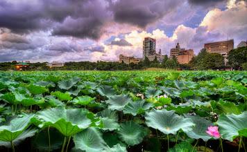Photo: The Shinobazu Pond in Ueno Park - Tokyo, Japan