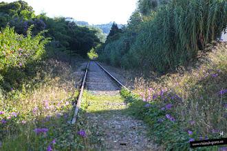 Photo: 12: Me gustan las vías de tren... y ésta se cruzó en mi camino, con sus florecillas violetas... <br>son caminos que llevan a sitios mágicos y desconocidos...