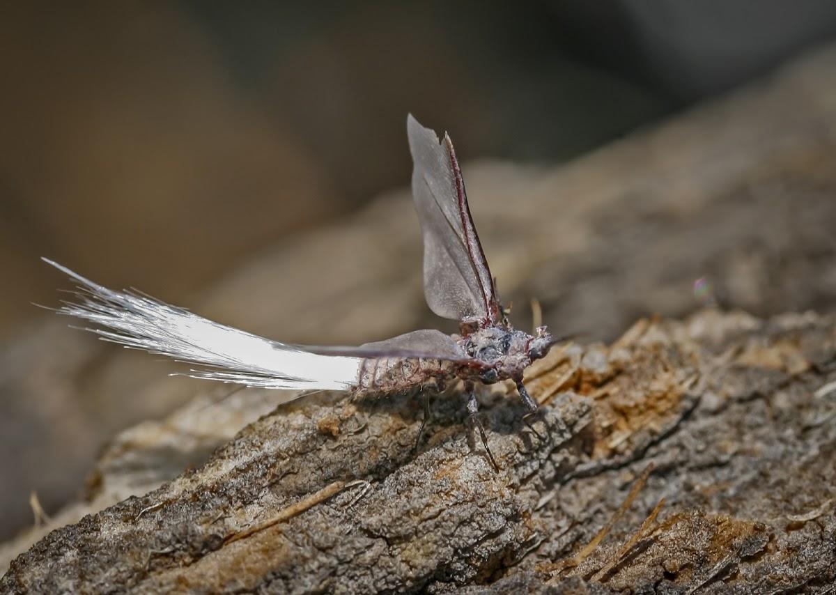 Bird of Paradise Fly