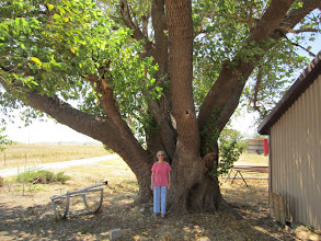 Photo: Next we measured the current state champ white mulberry (Morus alba), shown here beside owner, Renella Watson.