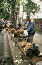 Photo: 10933 上海/自由市場/ニワトリ