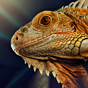 The Cute by Lay Sulaiman - Animals Reptiles ( macrophotography, reptile, animal,  )
