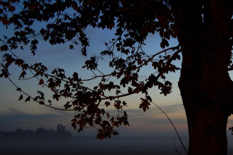 Nebbia d'Autunno di abi313