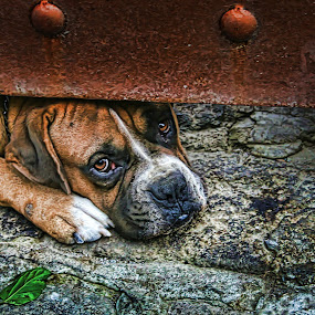FEELINGS by Nallely Martinez - Animals - Dogs Portraits ( look, curious, dog )
