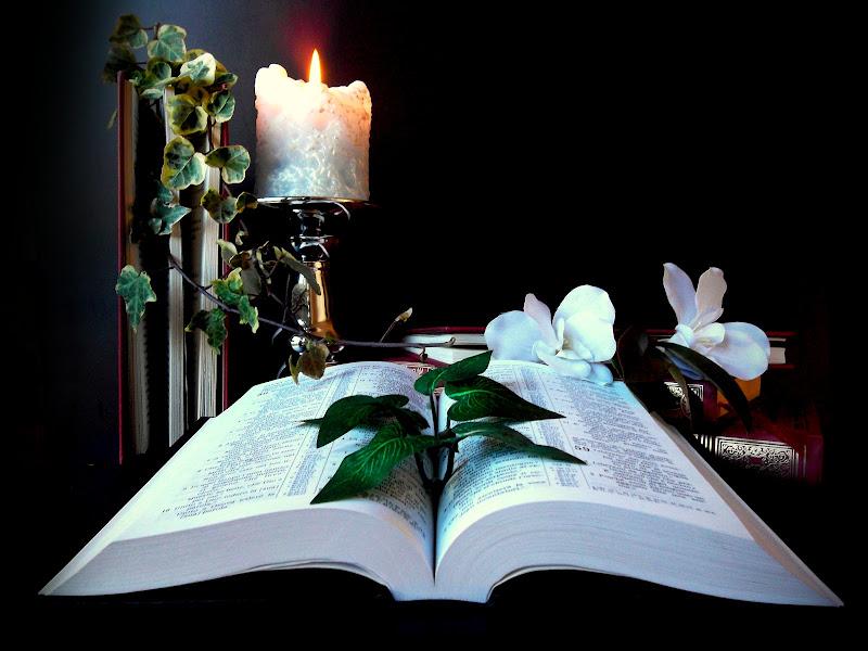 Nella conoscenza germoglia la speranza di Furlissima