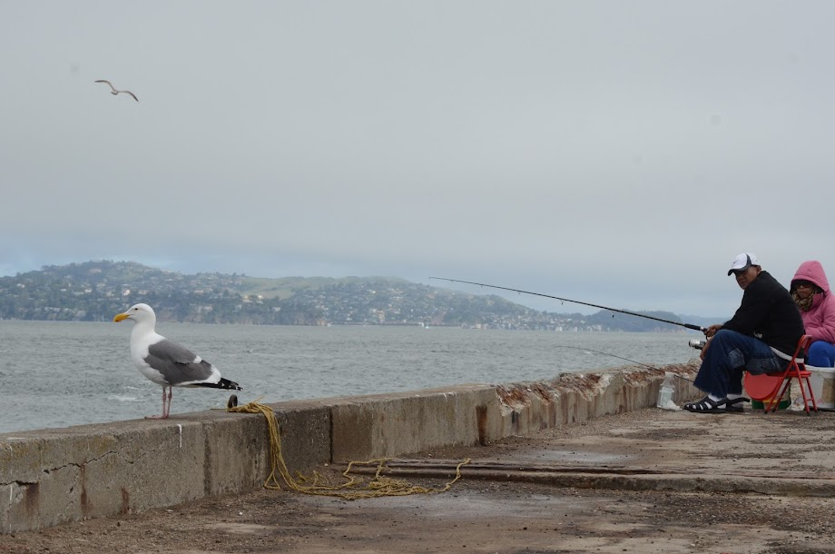 Near the Golden Gate Bridge: a best place to fish