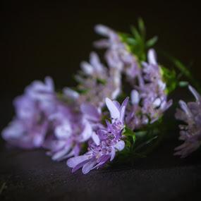 coriander flower by Arubam Meitei - Flowers Flower Arangements ( manipur, #light, homemade, small, flower )