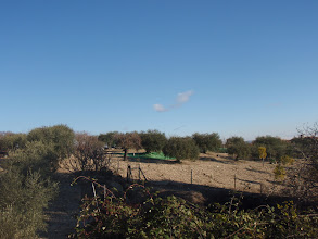 Photo: Camps d'oliveres.