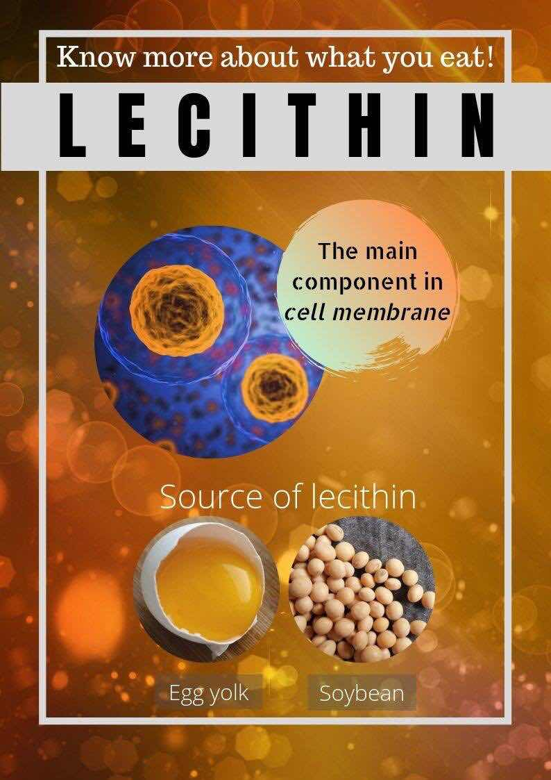 Curious to know more about Lecithin? Click on the images below to understand why it plays a vital role in our health.