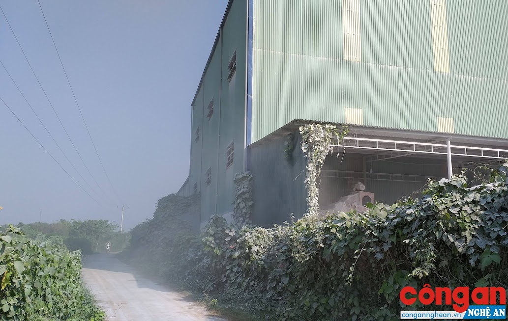 Con đường và hàng cây xanh cạnh Nhà máy sản xuất bột đá được phủ một lớp bụi trắng xóa
