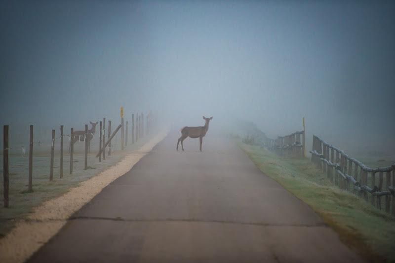...Bambi di alberto66