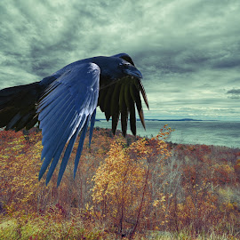 The Black Raven by Lorraine D.  Heaney - Digital Art Animals (  )