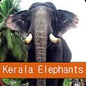 Kerala Elephants icon