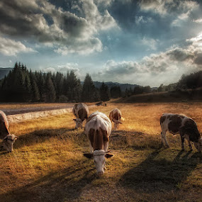 by Vasja Pinzovski - Landscapes Prairies, Meadows & Fields