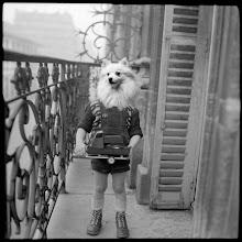 """Photo: Serie """"une vie de chien"""" de photomontage de 2012/2013 format 400x400 nb © Olivier Perrot http://www.tk-21.com/Cave-canemt"""