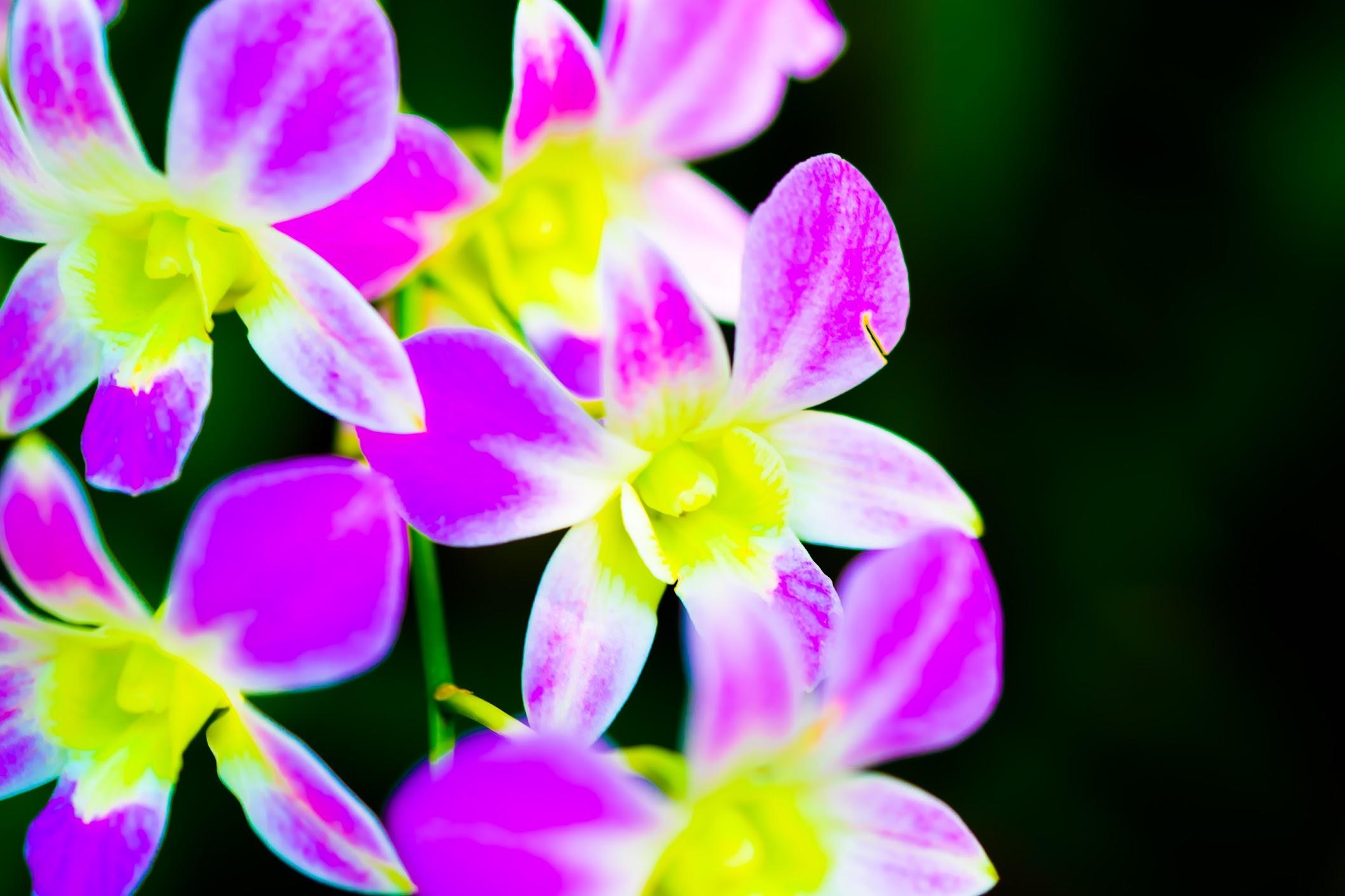 Singapore Botanic Gardens National Orchid Garden1