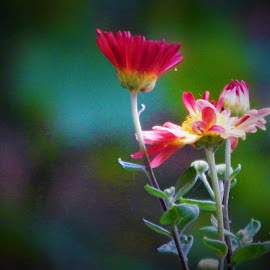summer time flowers  by Lavonne Ripley - Nature Up Close Other plants
