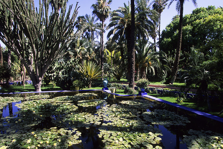 Majorelle Garden, pond with waterlilies.