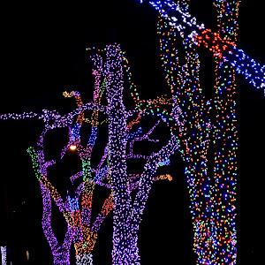 Pioneer tree lights 036.JPG