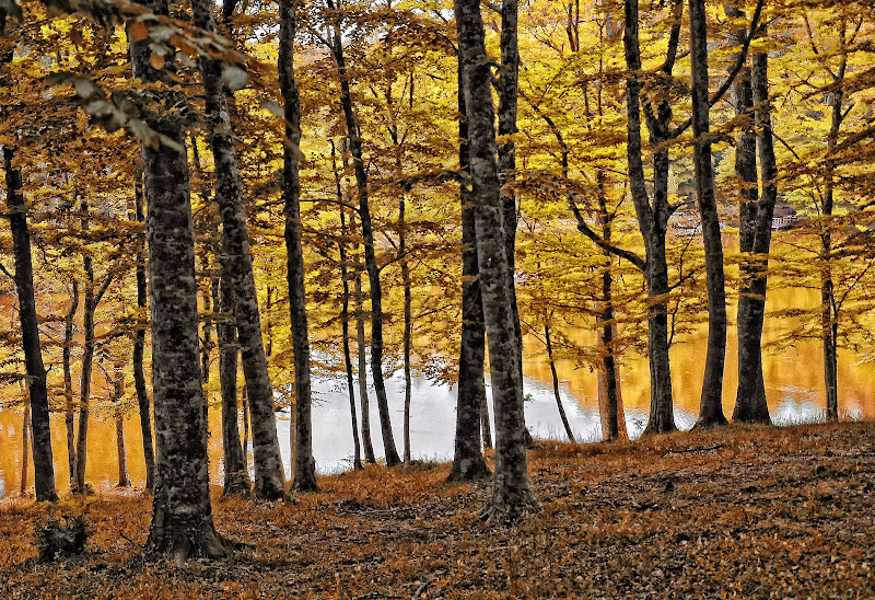 Autunno in un bosco di Diana Cimino Cocco