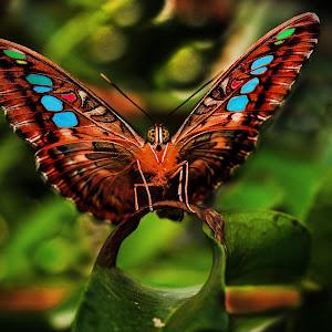 Butterflycolor.jpg