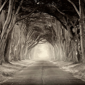 Path to the Wicked Witch by Christian Wicklein - Black & White Landscapes ( point reyes, fog, trees, bay area, tree tunnel, wizard of oz, san francisco )