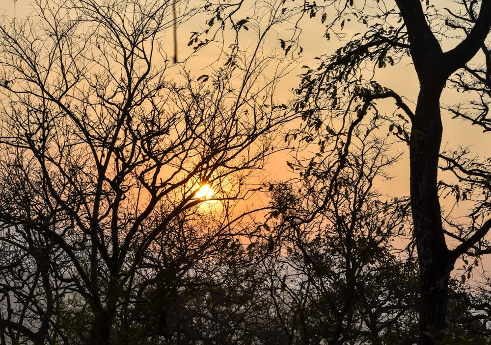a sunrise behind tree branches can show how there is light behind difficulties