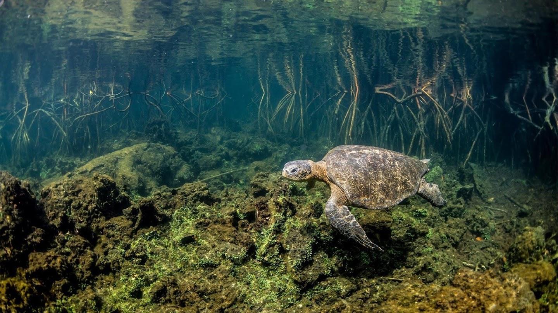 Watch Wild Galapagos live