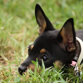 by Leslie Hendrickson - Animals - Dogs Portraits ( puppies, dog portrait,  )