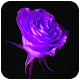 Download Purple Flower Wallpaper For PC Windows and Mac 1.02