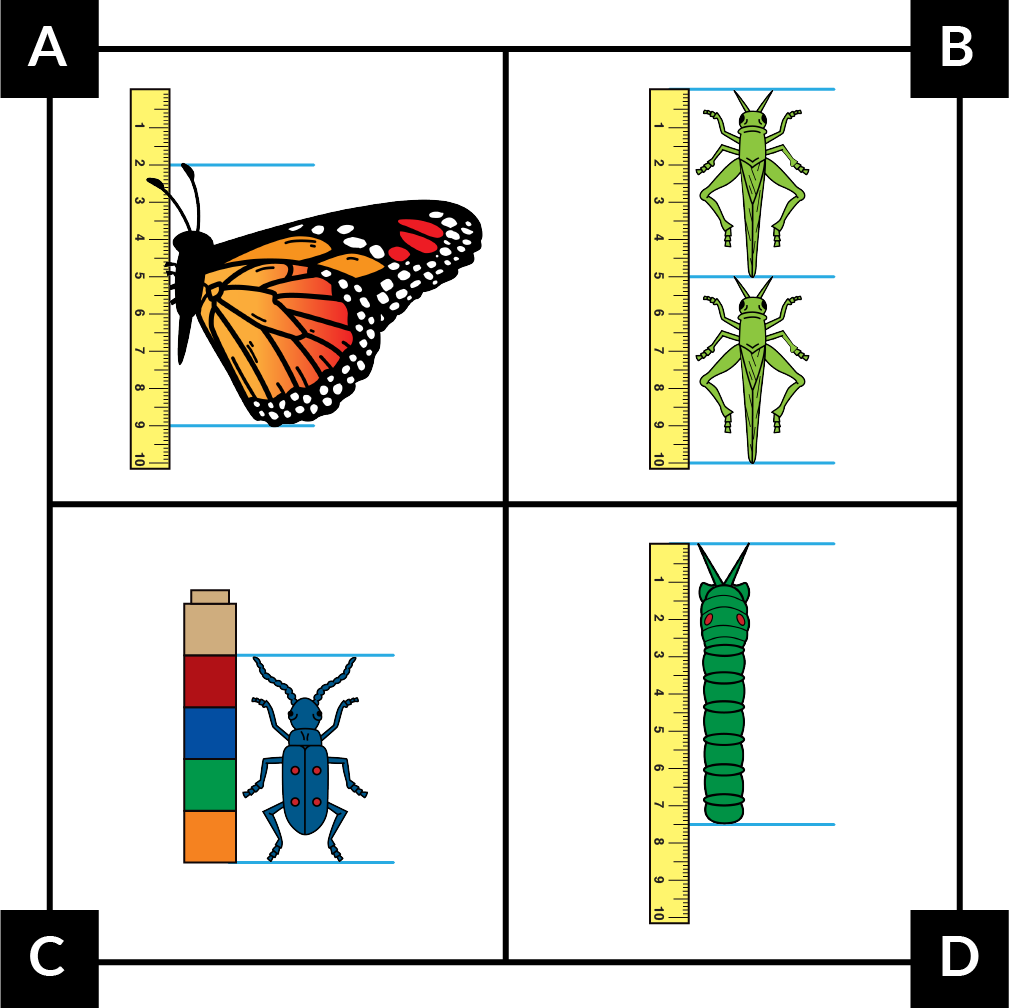 A: A butterfly is measured with a 10-centimeter ruler. It starts at 2 cm and ends at 9 cm. B: Two grasshoppers are measured with a 10-centimeter ruler. One starts at 0 cm and ends at 5 cm. The other starts at 5 cm and ends at 10 cm. C: A beetle is measured with 5 Unifix cubes. It starts at the bottom of the first cube and stops at the top of the fourth cube. D: A caterpillar is measured with a 10-centimeter ruler. It starts at 0 and stops halfway between 7 and 8 cm.