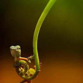 by Rifa Riza - Animals Reptiles