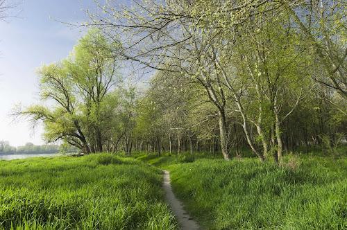 Passeggiando con la brezza nel verde di Roberto Simonazzi