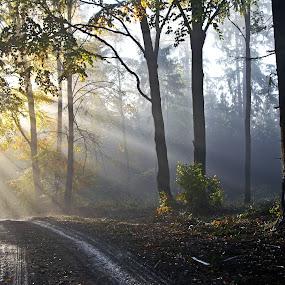 by Jana Černošková - Landscapes Forests ( forest, morning, rays,  )