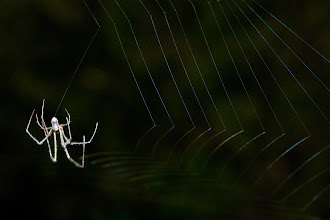 Photo: Spider Webbing