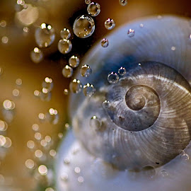 by Susan Campbell - Nature Up Close Other Natural Objects