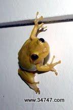 Photo: Tree Frog, East Village, Celebration, FL