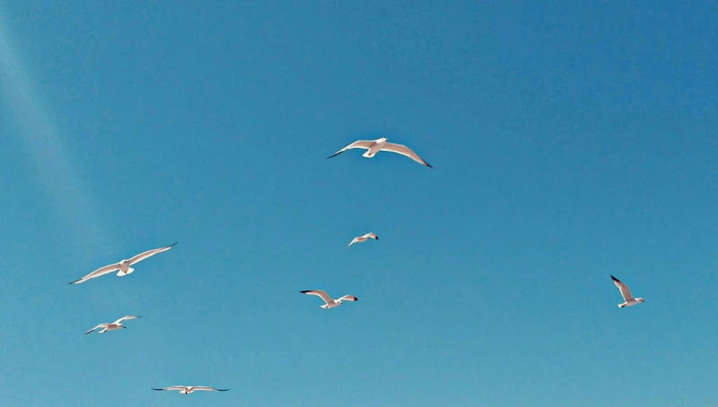 Volando di Bendys