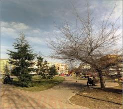 """Photo: Copaci din Turda,  Parcul Teilor - """"Altoiul face pomul pom şi şcoala omul om."""" - proverb romanesc... *Da! Chiar asa....! - 2019.03.07  https://www.facebook.com/photo.php?fbid=2776223049072102&set=a.983169181710840&type=3&theater"""