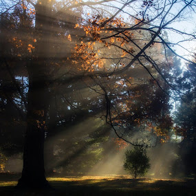 by Carolyn Odell - Landscapes Forests