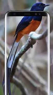 Bird Wallpapers HD 1